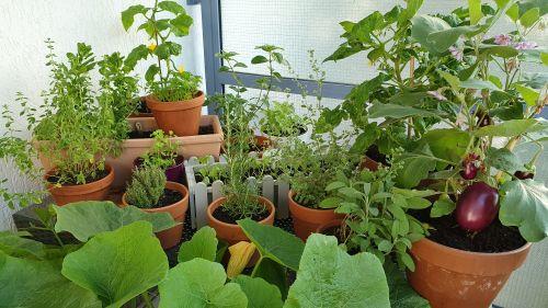 Gemüse auf dem Balkon anbauen